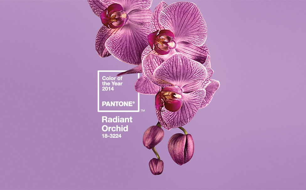 PANTONE COLOR OF THE YEAR 2014 - Radiant Orchid 18-3224